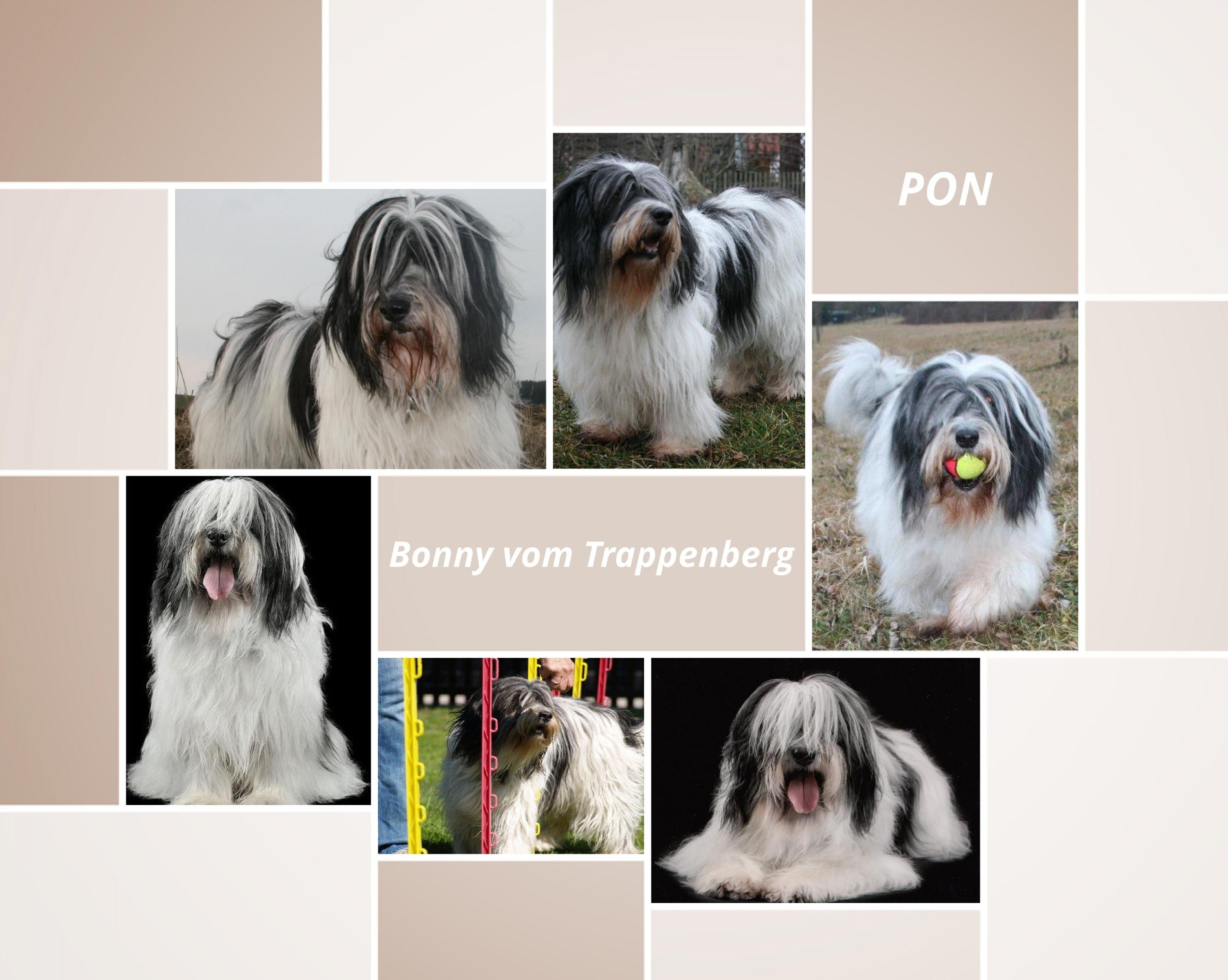bonny_collage